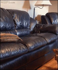 Clever dachshund dog uses pillow to jump onto couch. [video]