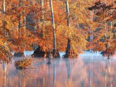 Sky Lake Is One Of The Best Natural Wonders In Mississippi Bald Cypress Tree, Cypress Trees, Southern Accents, Giant Tree, Natural Scenery, Natural Wonders, Small Towns, Mississippi, Acre