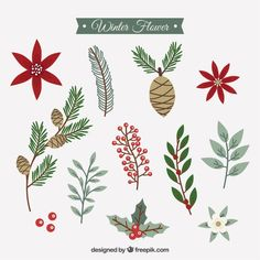 Collection of winter flowers in vintage style Free Vector. Christmas Doodles, Christmas Art, Christmas Decorations, Christmas Ornaments, Diy Note Cards, Watercolor Christmas Cards, Christmas Graphics, Vector Christmas, Winter Flowers