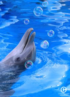 Did you know that Hope the dolphin absolutely LOVES bubbles?!