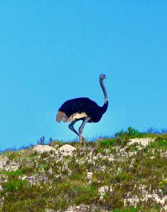 Wheretostay Namibia: Travel Planner & Routes into Namibia Flower Road, The Dunes, Travel Planner, Cape Town, Lodges, West Coast, Wild Flowers, Safari, Wildlife