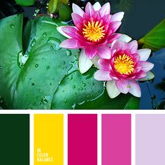 бледно-фиолетовый, желтый, зеленый, канареечно желтый цвет, малиновый, насыщенный зеленый, подбор цвета, розовый, светло-фиолетовый, фиолетовый, яркие оттенки розового, яркий желтый.
