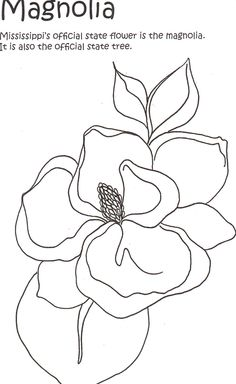magnolias Colouring Pages