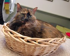 """I do love baskets"" - Snickers"