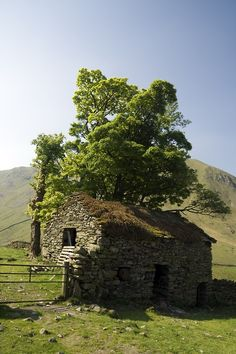 Old Stone Barn with a tree growing out of it.... -  Photo by Jeff Reed