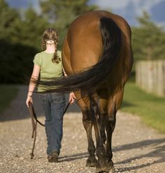 A great article on clicker training your horse