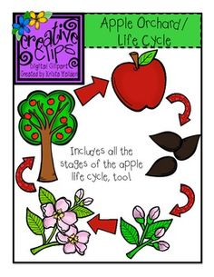 Apple Orchard and Apple Life Cycle Bundle {Creative Clips Digital Clipart} Apple Life Cycle, Crown Printable, Apple Unit, Apple Theme, Kindergarten Lessons, Apple Orchard, Chenille, Child Life, Science For Kids