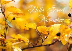 Hello Sweet November