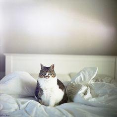 i love fat cats <3