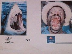 Stormers vs Sharks Sports Humor, Sharks, Rugby, Shark, Workout Humor, Football
