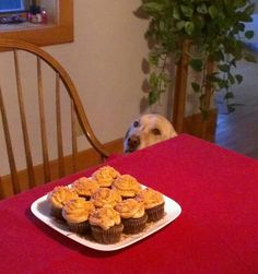 Peanut Butter Butterfinger Cupcakes. Even the dog wants one!.. definitely my best seller!
