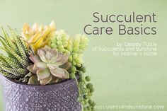 Awesome Tips for Indoor Succulent Care. Maybe I can keep mine alive now! :)