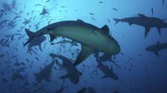 circle shark - Google 검색