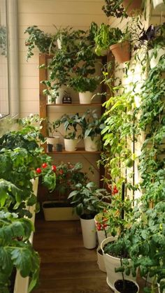 Apartment Balcony Garden, Small Balcony Garden, Small Balcony Decor, Balcony Plants, Apartment Balcony Decorating, Indoor Garden, Indoor Plants, Balcony Ideas, Outdoor Balcony