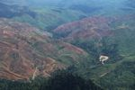 cool KFC, Taco Bell, Pizza Hut adopt zero deforestation policy for palm oil