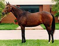 Kentucky Broodmare of the Year for 1992  Weekend Surprise by Secretariat out of Lassie Dear by Buckpasser. Her third dam was super broodmare Missy Baba. She was dam to Belmont winner and champion AP Indy and also Preakness winner Summer Squall, who both sired classic winners and champions.