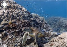 Google street-view goes under the sea in the stunning Great Barrier Reef in Queensland, Australia!