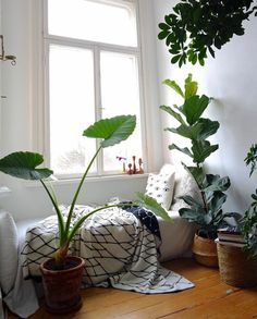 All you need is clothes, plants, pets and a good spirit