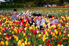 Photos - Tesselaar Tulip Festival