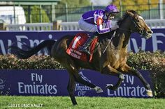 http://www.paulickreport.com/news/breeders-cup/last-of-european-contingent-arrives-safely-at-santa-anita/