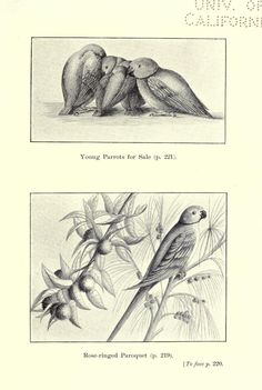 Some Indian friends and acquaintances; - Biodiversity Heritage Library