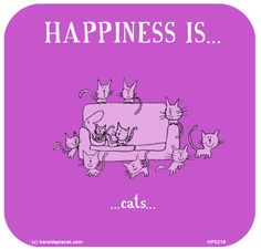 HAPPINESS IS: Cats...
