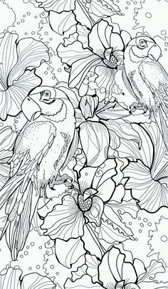 adult parrot difficult coloring pages printable and coloring book to print for free. Find more coloring pages online for kids and adults of adult parrot difficult coloring pages to print. Bird Coloring Pages, Adult Coloring Book Pages, Colouring Pics, Printable Coloring Pages, Coloring For Kids, Coloring Sheets, Coloring Books, Colorful Pictures, Sketches