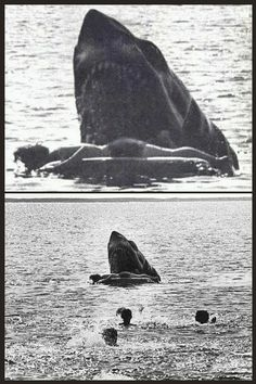 Cut scene from Jaws - what the Kitner death was originally intended to be. No footage exists but this still is nightmare fuel. Jaws Film, Jaws Movie, Jaws 2, Scary Movies, Great Movies, Horror Movies, Cthulhu, Le Kraken, Shark Pictures