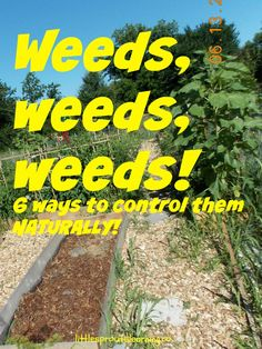 6 ways to control weeds naturally.