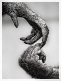 the Touch by Gabriele Tenhagen-Schmitz on 500px