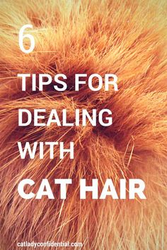 Tips for dealing with cat hair