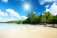 Sea and Palms