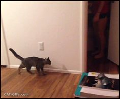 CAT GIF • Boo! Funny Cat reflex. Curious Cat jumps high scared of girl, haha.