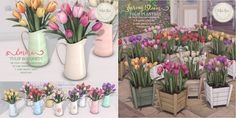 https://flic.kr/p/Snhwxh | Tulips for Fifty Linden Friday | For this week's Fifty Linden Friday!