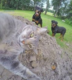 Manny, 2016 Saturday morning like. Cute Funny Animals, Funny Animal Pictures, Funny Cats, I Love Cats, Cool Cats, Gopro, Cute Horses, Cute Creatures, Cat Life