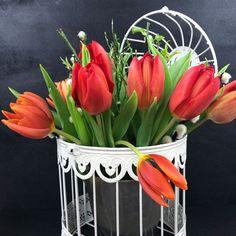 Rote Tulpen im Frühling