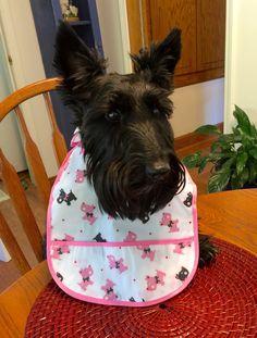 Happy National Dog Day www.indyandlucy.com