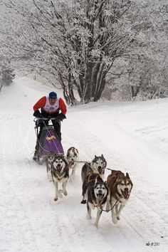 Ride in a dog sled Cool Countries, Countries Of The World, Dashing Through The Snow, Continental Europe, Heart Of Europe, Danube River, Central Europe, Bratislava, Lonely Planet