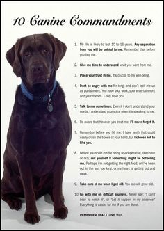 """"""" Love me, please love me, je suis fou de vous... """" ( Michel Polnareff ) / Les 10 Commandements canins. / 10 canine commandments."""