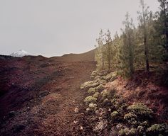 nevver:  The lost world, Meike Nixdorf
