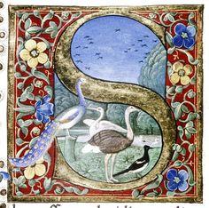 Douce Pliny - Florentine Venice 1476-21