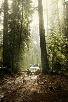 jeep in forest trail