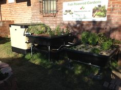 Testimonials & Customer Aquaponic Pictures - Endless Food Systems