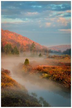 West Virginia's Monongahela National Forest.  My Hall ancestors lived near here for a time.