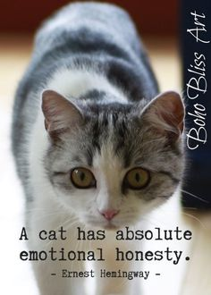 Ernest Hemingway Quote: A cat has absolute emotional honesty. Gift For Cat Lovers Cat Gifts For Her, Cat Lover Gifts, Cat Lovers, Hemingway Quotes, Ernest Hemingway, Hemingway Cats, I Love Cats, Crazy Cats, Cat Quotes