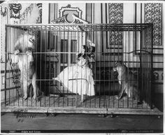 Adgie and her trained lions - 1897