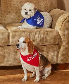 Each Piece In This Set Of 2 FunDog Bandanas Features A Humorous Phrase That Matches Your