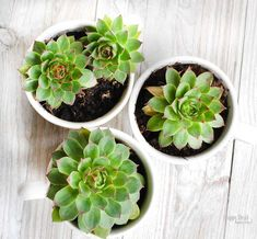 Great Gift Ideas for Everyone – Blue Pelican Gifts – Diy Gifts For Friends Unique Gifts For Men, Easy Gifts, Homemade Gifts, Great Gifts, Propagating Succulents, Planting Succulents, Succulent Arrangements, Diy Gifts For Friends, Gifts For Teens