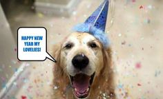 Here Are Tips for Caring for your Dogs Funny New Years Memes, New Year Meme, Funny Dog Memes, Funny Dogs, New Beginnings, Happy New Year, Posters, Animals, Animales