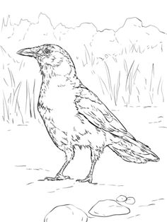 Click To See Printable Version Of Realistic American Crow Coloring Page